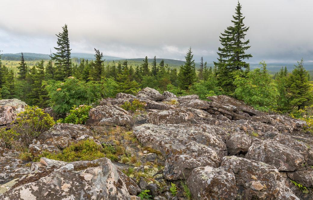 Bear-rocks-dolly-sods-wilderness-in-west-virginia